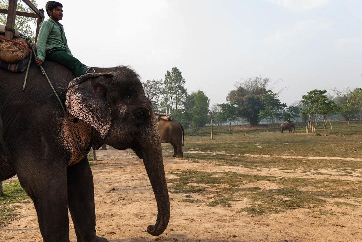 Elephant with its trainer waits to carry tourists around the beautiful Chitwan National Park, Nepal.