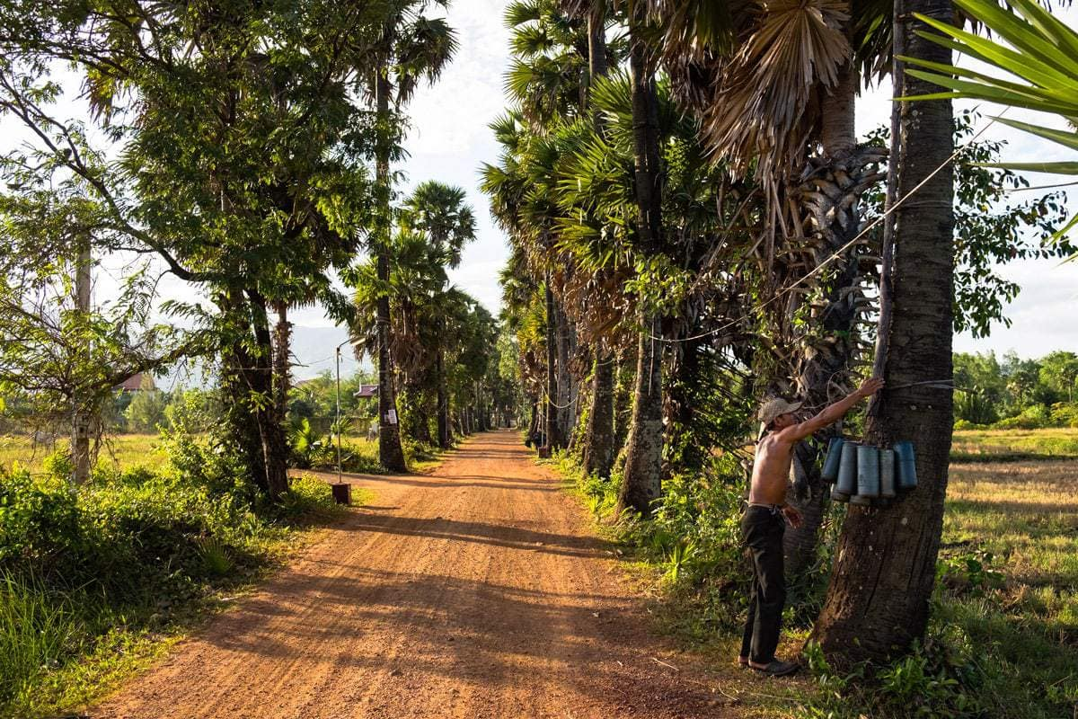 Khmer farmer is about to climb a palm tree