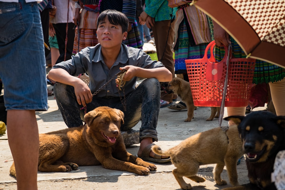 A Vietnamese seller holds a dog on a leash ready to be sold at Bac Ha market in Vietnam.