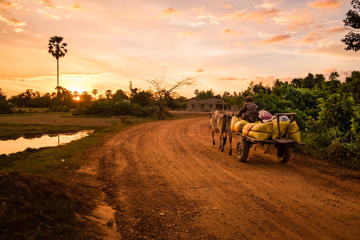 Kampot countryside at sunset! Khmer farmer goes back home after a long working day. Kampot, Cambodia.