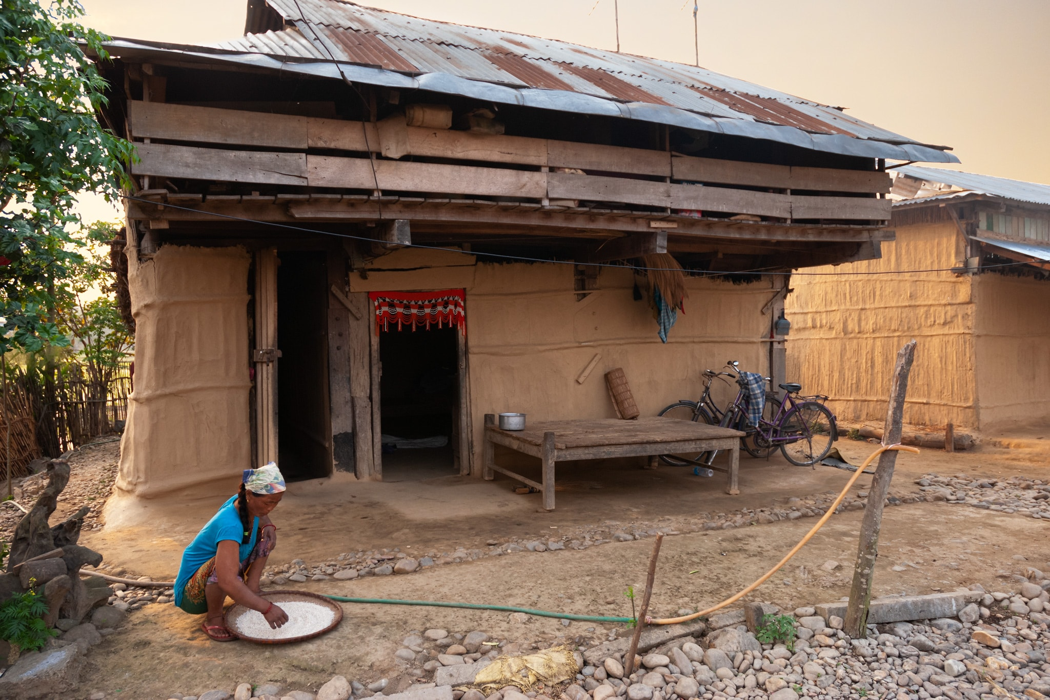 Tharu woman cleans rice in front of her traditional Tharu house made of straw and clay. Chitwan, Nepal.