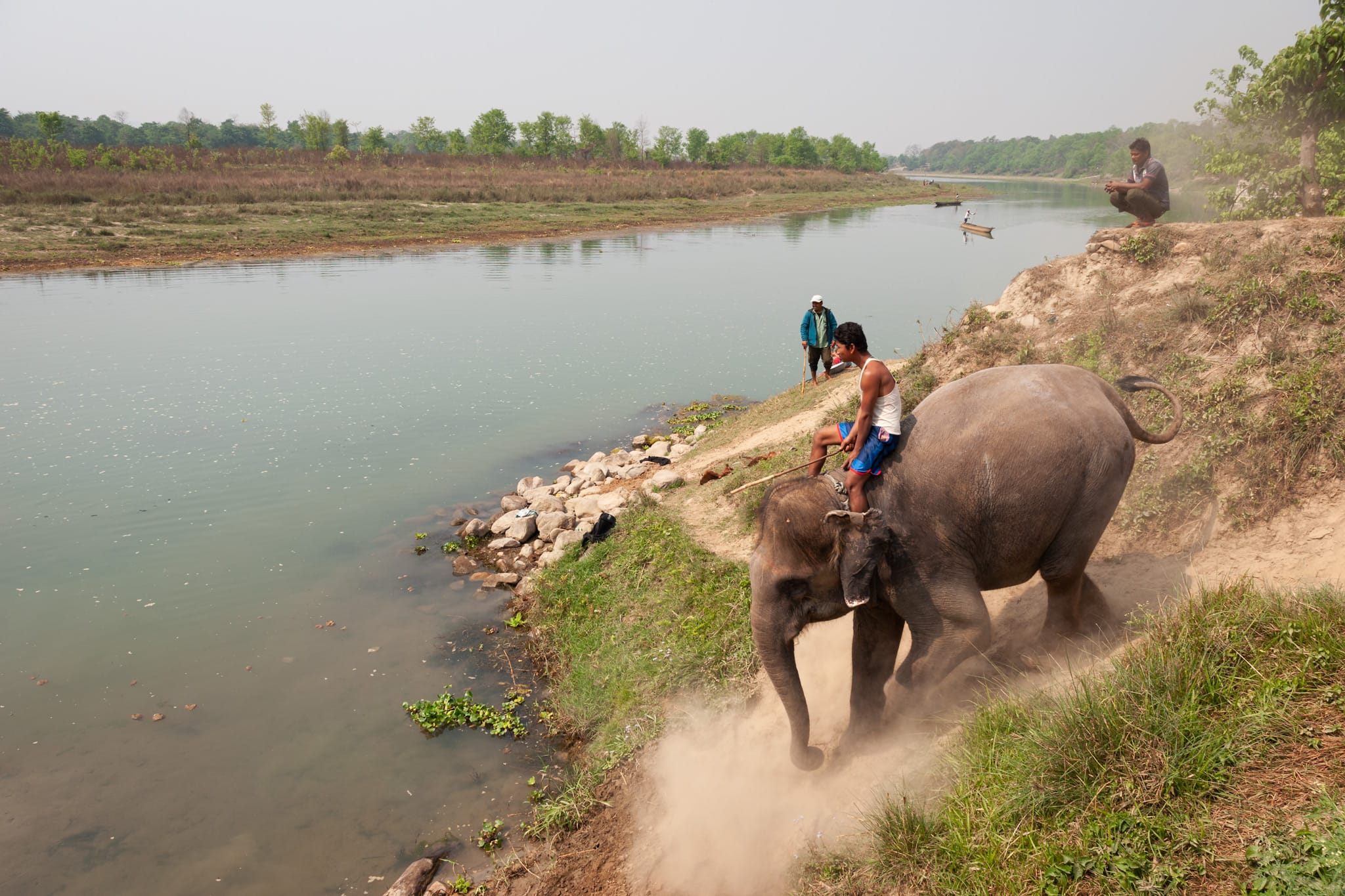 Elephant with its owner goes to bathe in the Narayani River in the Chitwan National Park, Nepal.
