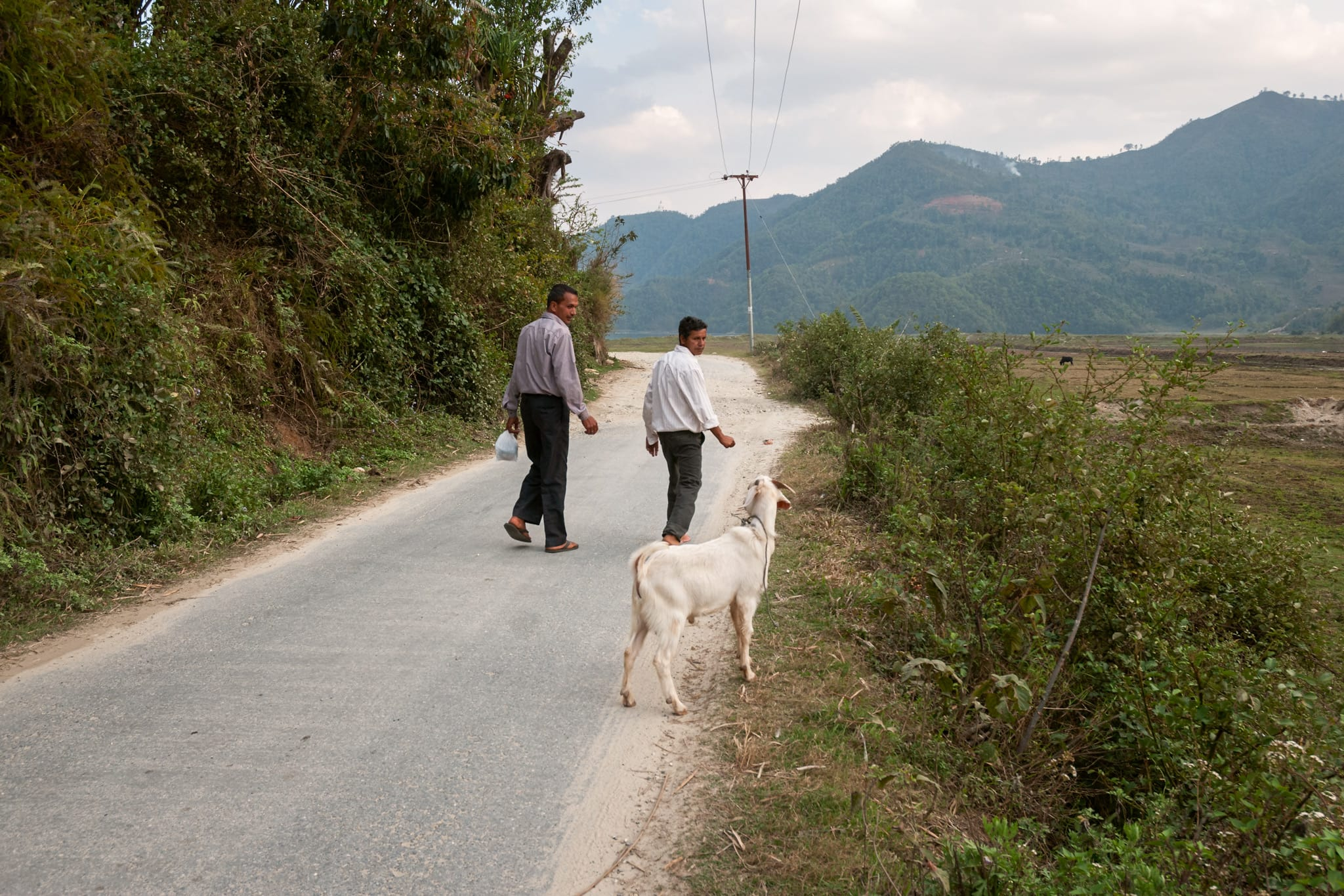 Two Nepalese men and goat walk on a countryside road near Pokhara, Nepal.