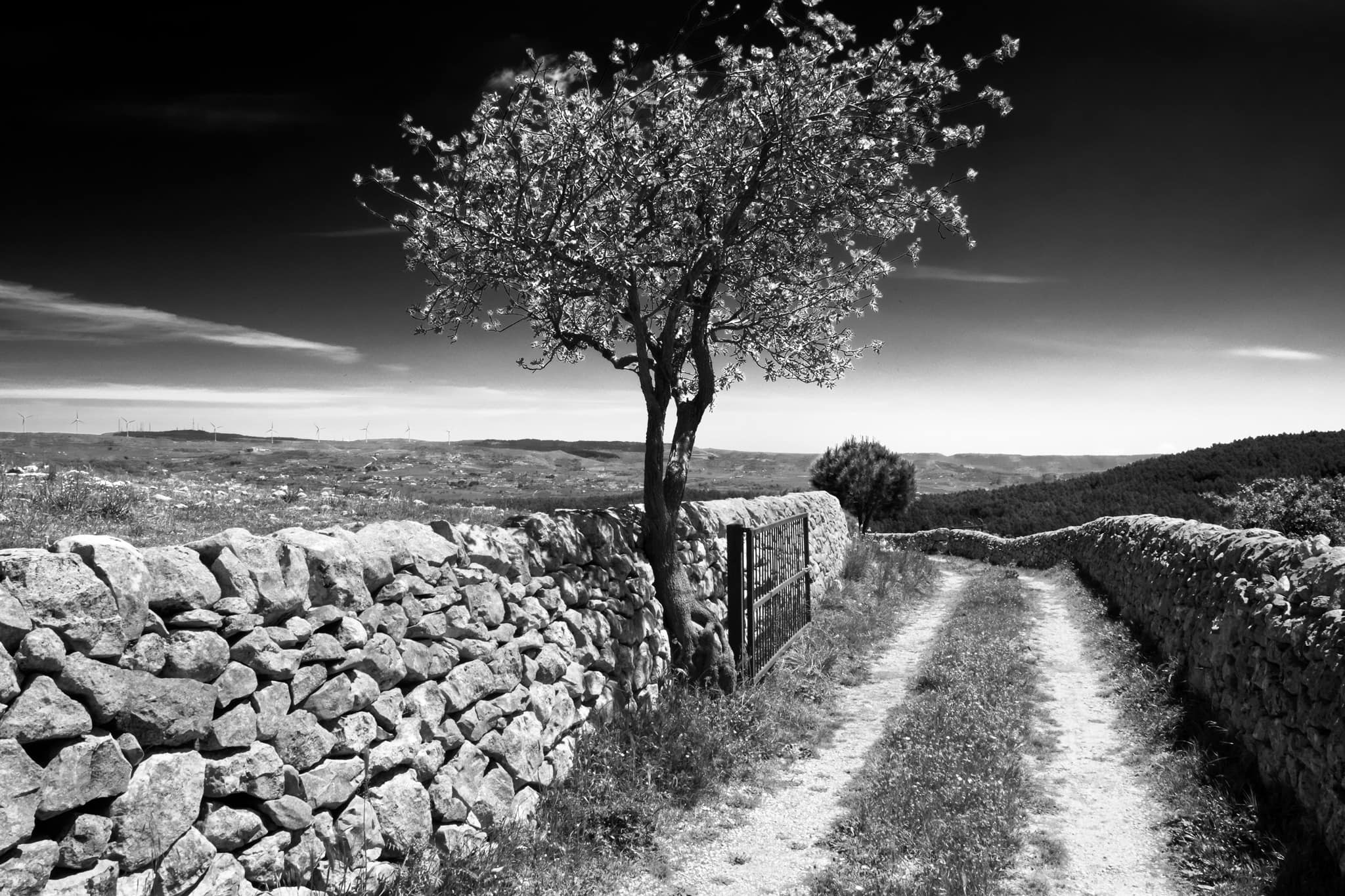 Black & white tree and open gate to the countryside of Chiaramonte Gulfi. Sicily, Italy.